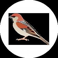 SparrowQuantum